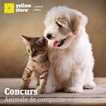 Castiga un voucher Yellow Store in valoare de 100 lei